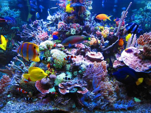 beautiful-coral-reef1